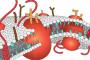 Il Profilo Lipidico