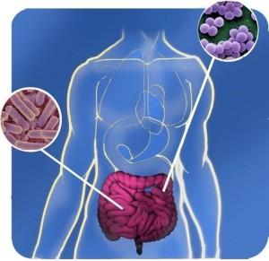 FT_89_Gut_microorganisms_crop