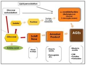 ages-prodotti-di-glicazione-avanzati_clip_image003
