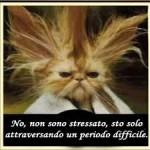 DOTTORE, SONO STRESSATO, MANGIO DA FARE SCHIFO!!!!