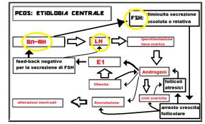 PCOS-etiologia-centrale7