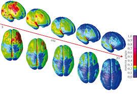 alcol maturazione cervello