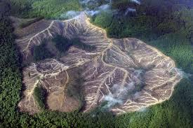 olio palma deforestazione 3