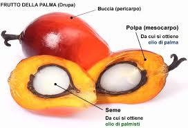 olio palma mesocarpo