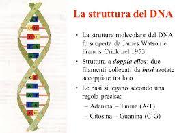 struttura dna