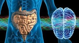 prebiotici-intest-secondo-cervello