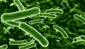 prebiotici-lactobacillo-rhamn