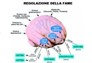 controllo fame leptina