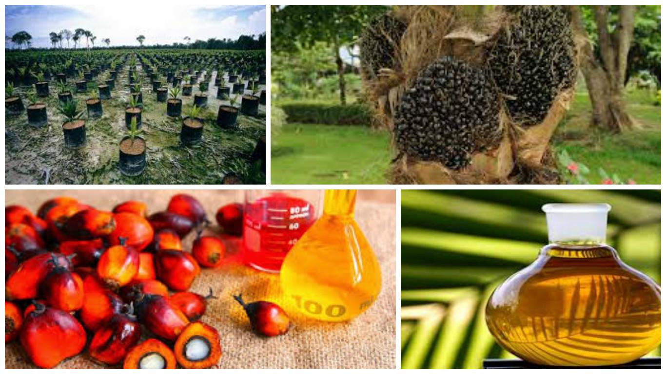 FotorCreated-olio-palma